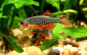 Harga ikan hias aquascape