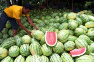 harga buah semangka