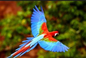 Harga Burung Macaw Di Pasar Pramuka