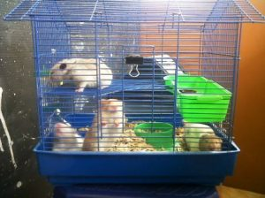 Kandang Hamster Unik