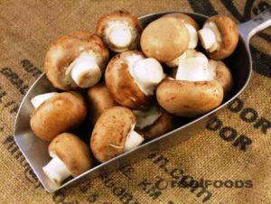 harga jamur merang per kg