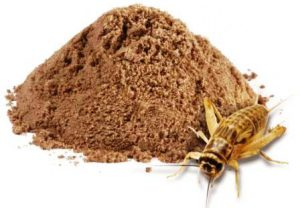 harga tepung jangkrik per kg