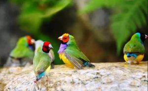 Harga Burung Emprit Pelangi