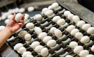 Harga Telur Arboge
