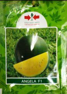 harga bibit semangka inul