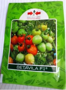Harga bibit tomat Betavila