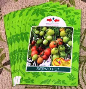 Harga bibit tomat Servo