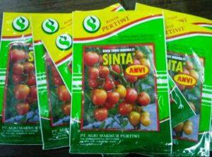 harga bibit tomat Sinta