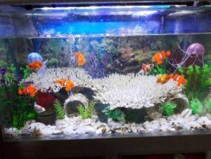 Harga Ikan Nemo air tawar di Akuarium