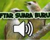 Daftar Suara Burung